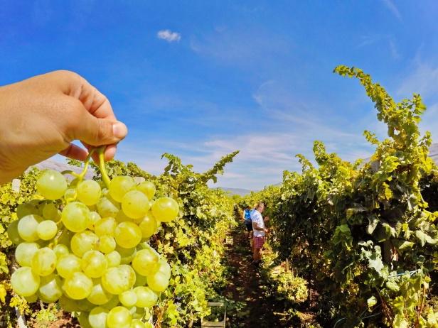 trebinje info trebinje foto vinarija bojanic www.trebinjeinfo.com