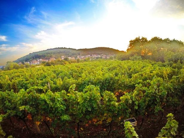 trebinje info trebinje foto vinarija bojanic