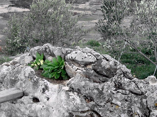 Trebinje cvijet u kamenu trebinjeinfo trebinje