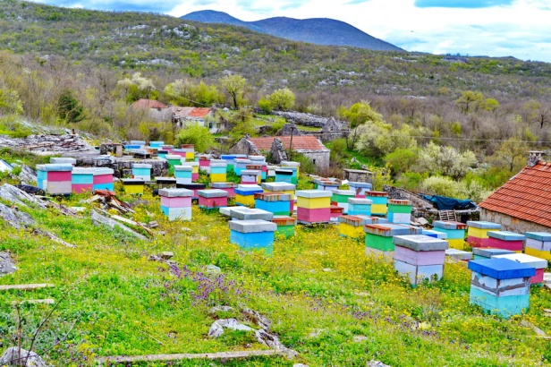 pcelarstvo rade ninkovic i sinovi trebinje med pčele trebinjeinfo