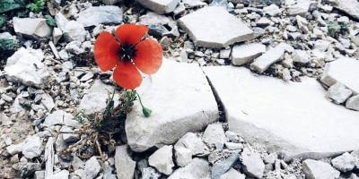 Trebinje Cvijet u kamenu 1