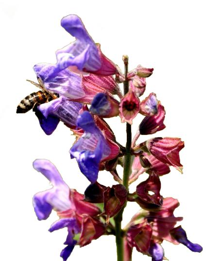 cvijet-pcela