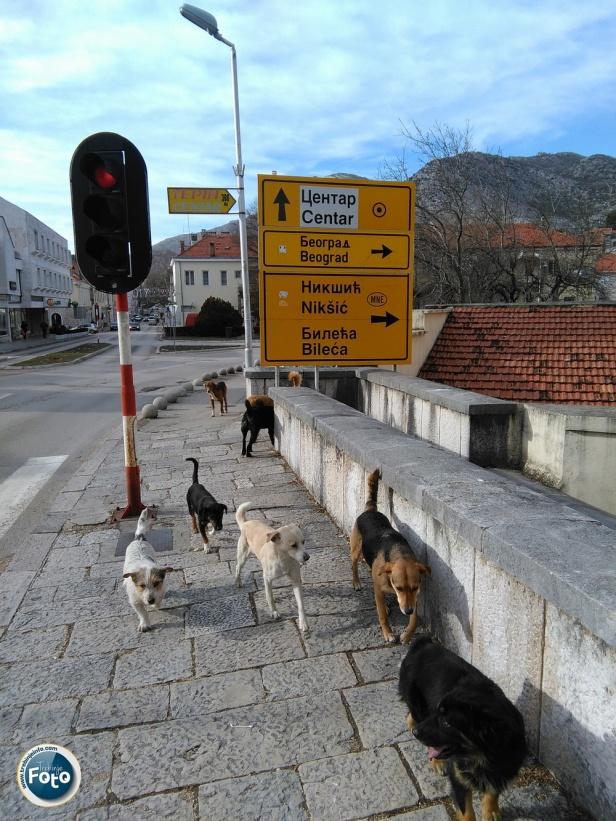 Psi Lutalice Trebinje