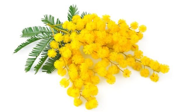 Mimoza Herceg Novi 2