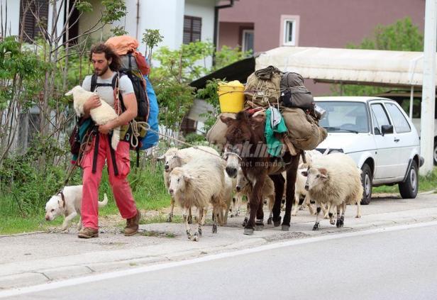 PastirOvceCapljina.jpg