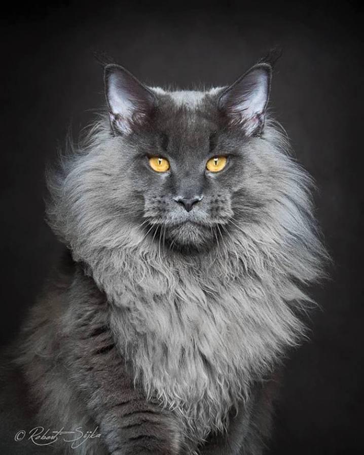 Ultra fotografije životinja (10).jpg