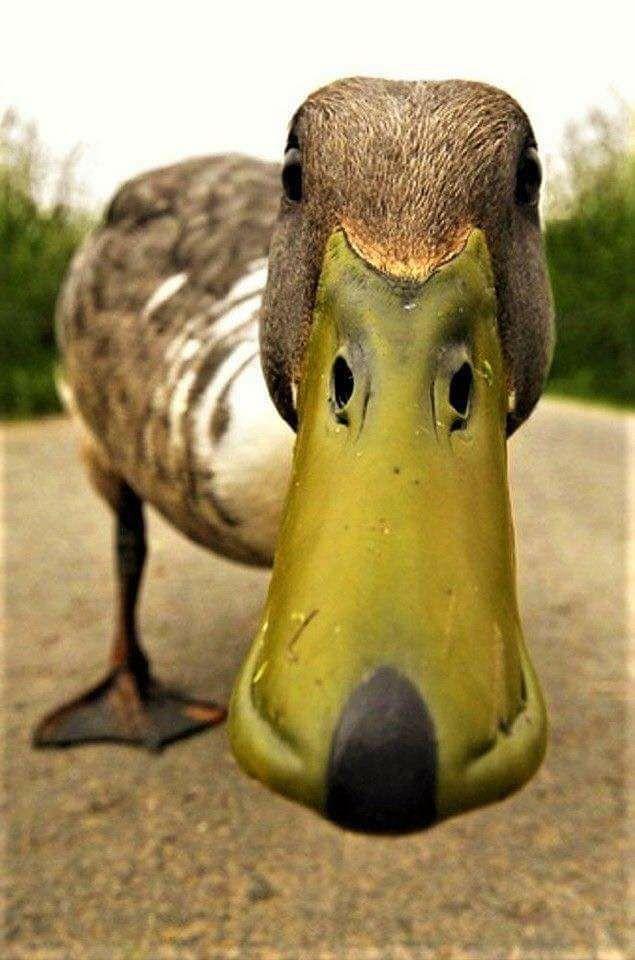 Ultra fotografije životinja (3).jpg
