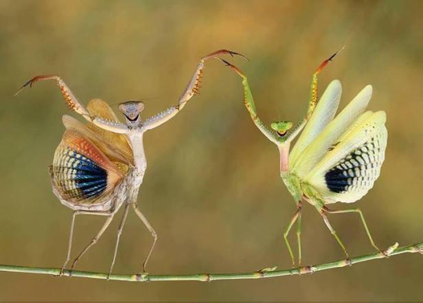 Ultra fotografije životinja (5)