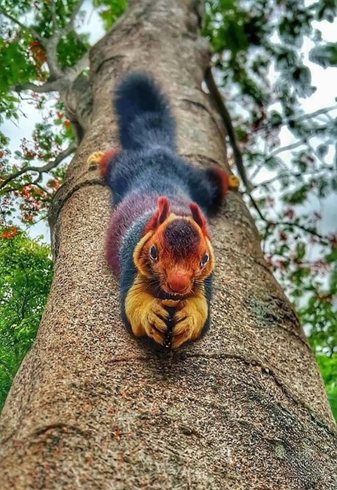 Ultra fotografije životinja (6).jpg