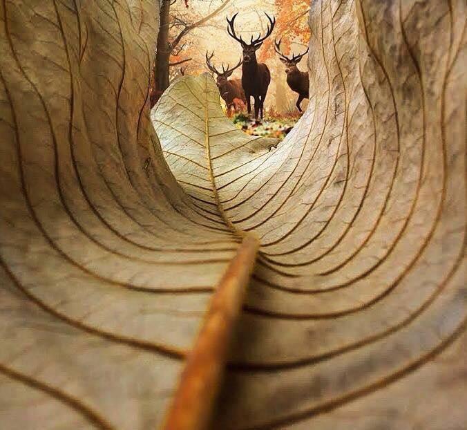 Ultra fotografije životinja (8).jpg
