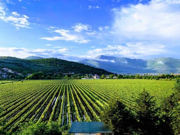 APARTMANI IVKOVIĆ vinogradi